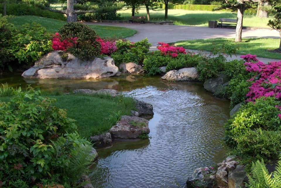 How to Take Care of Water Garden